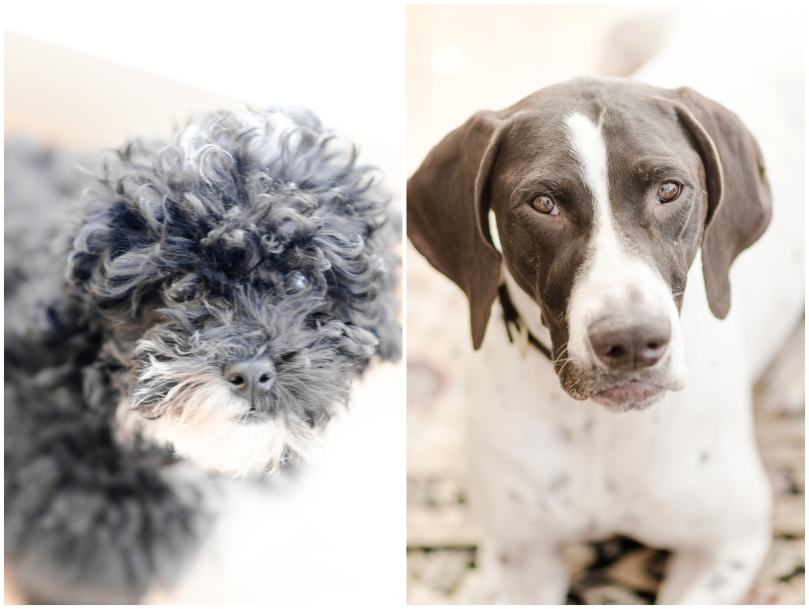 Alexandra Michelle Photography - Dogs-1