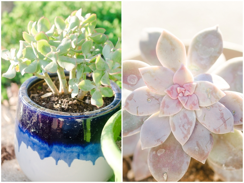 Alexandra Michelle Photography - Succulents-4