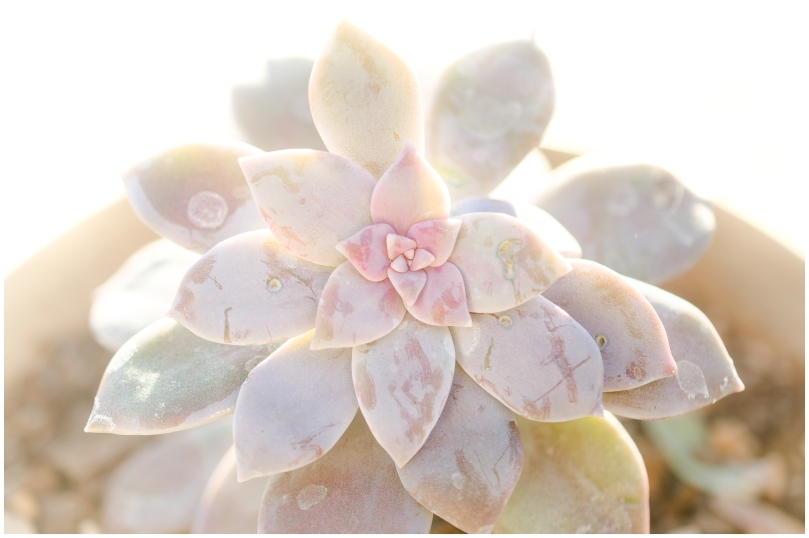 Alexandra Michelle Photography - Succulents-5