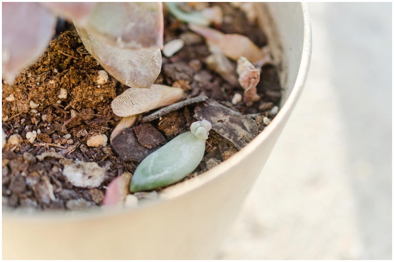 Alexandra Michelle Photography - Succulents-8