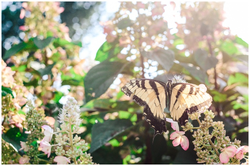 Alexandra-Michelle-Photography- Butterfly-11